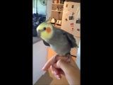 Дабстеп от попугая