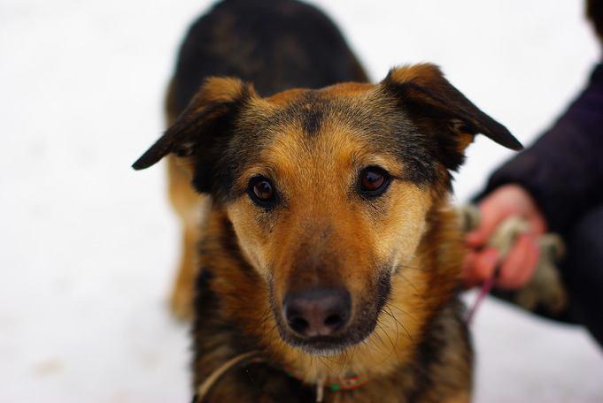 Хозяев ищет собака Черри из приюта «Искра»