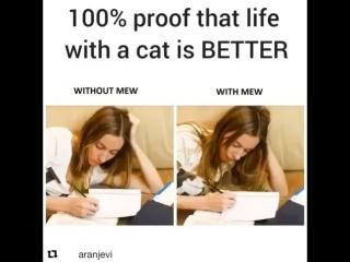 Жизнь без кота VS жизнь с котом