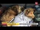 На Закарпатті собака два дні захищав на залізничних рейках свою подругу