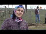 Бабушка рассказала, ка убила 80 змей в Дагестане