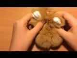 My Bunny Taffy!!!!