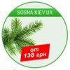 Искусственные елки, сосны: купить Киев, Украина