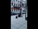 Питер, уличные музыканты ) 3 хорошо поёт