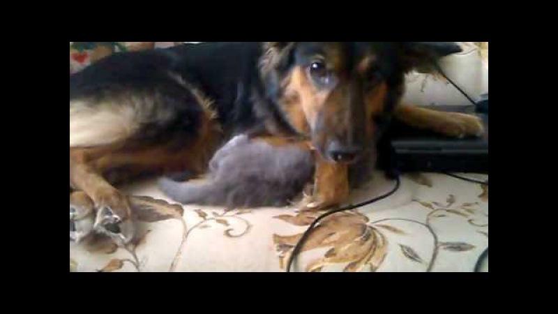 Собака мать и котенок сын Няши