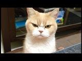 Смешные кошки приколы про кошек и котов 2017