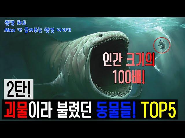 [랭킹 차트] 무려 인간 크기의 100배! 괴물이라 불렸던 공포의 동물들! 2탄! TOP5 (Mco4403