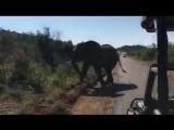 Встреча слона и Арнольда Шварценеггера