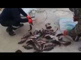 КРУПНЫЙ ОКУНЬ ЗИМОЙ! Вот это прикол! Рекордная рыбалка на снасть убийца ( ОКУНЯ)