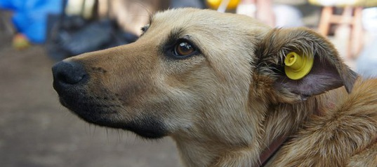 Заниматься отловом бродячих псов будут по-новому