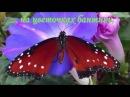 Релакс Полет бабочки