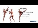 Axe Kick Anatomy Taekwondo Kyokushin Karate Martial Arts Naeryeo Chagi