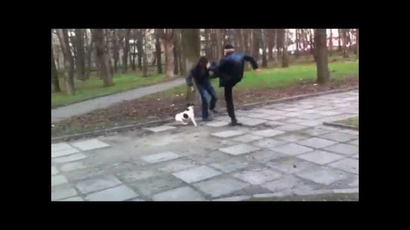 С таким псом можно не бояться драки или собака защищает хозяина в бою.