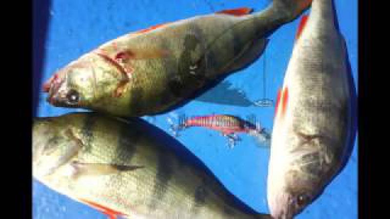 Обзор воблера Yo-zuri 3d Shad и Копии на него с aliexpress. Рыболовные товары с Aliexpress.