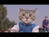 ЛУЧШИЕ ПРИКОЛЫ с котами 2016 Самые смешные видео про кошки и коты Подборка приколов