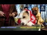 Дрессировка собак Буча Ирпень Ворзель Киев ДРЕД DRED
