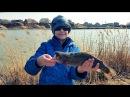 Блесной в лоб С ребенком на рыбалке прудовая форель