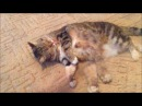 Мои домашние животные Хорьки Марсель и Алиса кошка Даша Один из вечеров , когда не кто не хочет