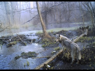Animal Planet HD/Чернобыль: Жизнь в смертельной зоне