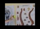 Как быстро убрать боль в спине убрать нестабильность шеи и понизить давление