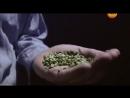 Пища Богов. Тайны бобовых культур фасоль, горох, бобы и тд