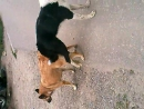 В заднице … собаки)