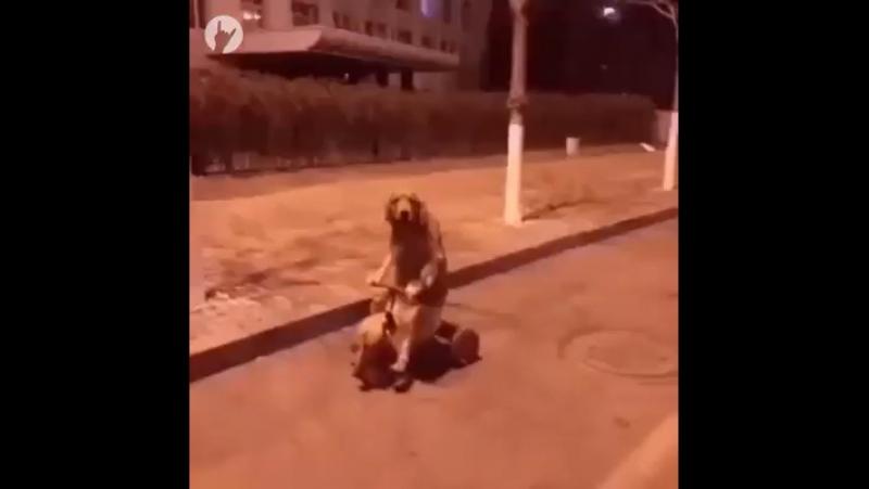 Bizim sokaklarda böyle