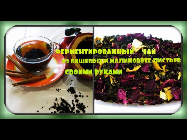 Ферментированный чай из листьев малины и вишнисвоими рукамиfermented tea, cherry and raspberry