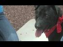 Этой слепой собаке прострелили все лапы и бросили умирать на дороге. Но проходящие мимо и чудом обнаружившие её ребята смогли помочь ей.