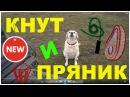 Воспитание собаки Метод кнута и пряника