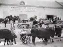 Volga Famine of the 1920's