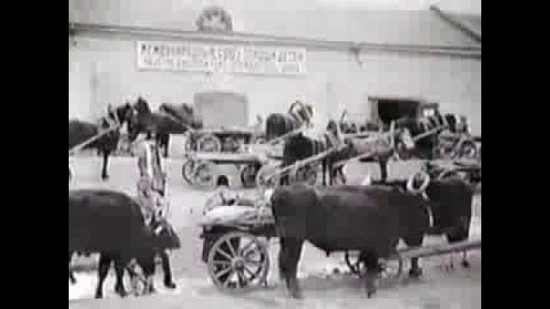 Volga Famine of the 1920s