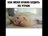 как нужно будить меня по утрам