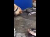 Самое грустное видео ебучая рыба жертва карателей