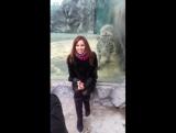 Девушка фотографируется с тигром