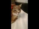 1759. 10.09.2016 - Милый и нежный Барсик (Барс) выхватил счастливый билет и уехал с котомамой в Германию! (видео из дома)