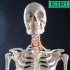 Скелет Человека  Макеты Муляжи