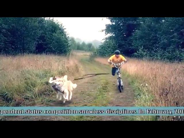 Международная гонка на собачьих упряжках Северная надежда, Костромская область