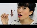 Kto zje owada Sonda uliczna degustacja
