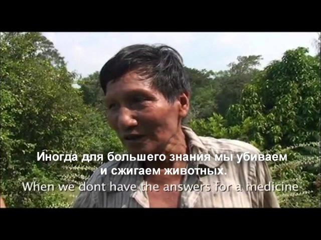 Айяуаска: история одного путешествия