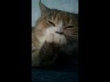 Бабушкина кошка.