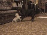 Dogs Fight (собачий бой)