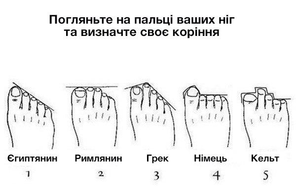 Типи ніг