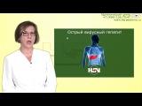 Вирусный гепатит B,C,D диагностика, лечение