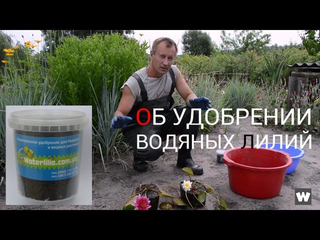 Удобрение для водяных лилий Waterlilia. Эксперимент с посадкой нимфей вариант (EURO) евро