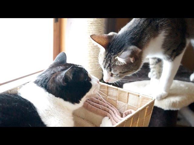 争いはしない猫