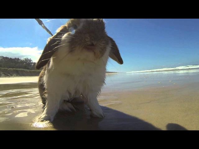 Rabbit at the beach