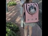 рюкзак переноска для кошки