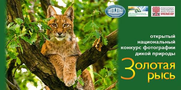 Открытый национальный  конкурс фотографии дикой природы «ЗОЛОТАЯ РЫСЬ»