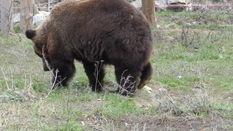(39) Юля - FOUR PAWS Bear Projects Ukraine